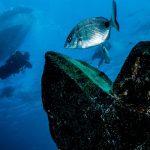 Descubre el mar con sa caleta tenerife