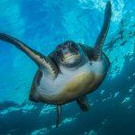 Buceo con tortugas en Tenerife