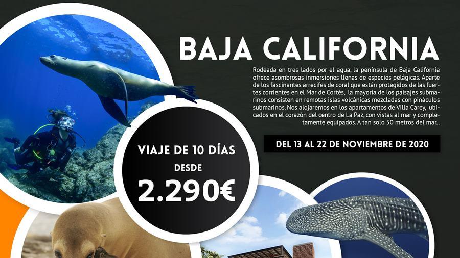 Viaje de Buceo a Baja California